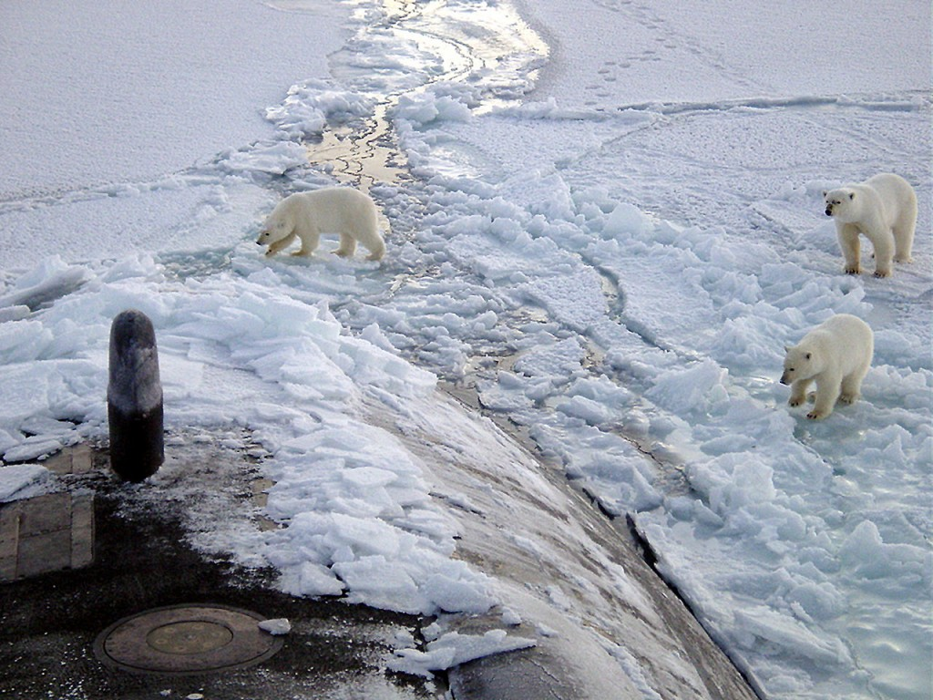 Polar Bears and Submarine
