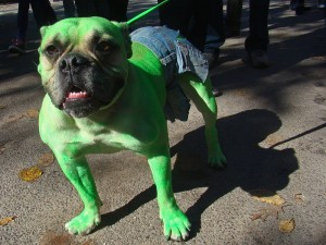 This dog is upset.  But he's green, so . . . .