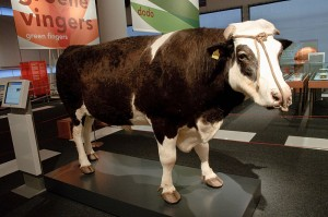 Herman the Bull (not from Tampa or USF)