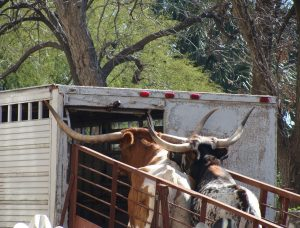 Texas riding steerage?
