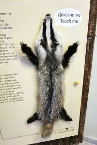 ecomuseum_-_badger